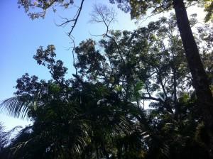 floresta wald
